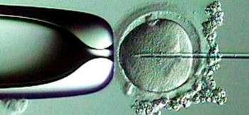 In vitro культура тканей – новое слово в селекции