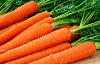 Выращиваем морковь своими руками