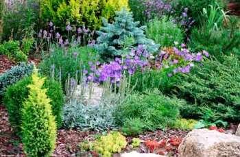 Особенности и подбор растений для альпийской горки