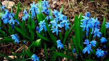 Подснежник - первый звонок весны