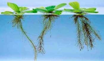 Водный режим растений