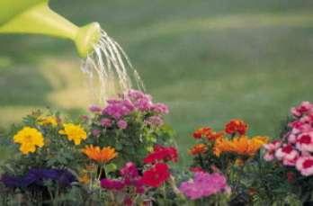Основные правила полива растений на участке