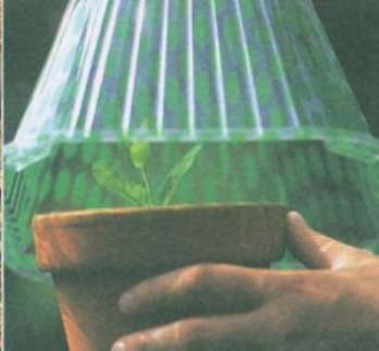Способы размножения растений: черенками, отводками и делением