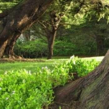 Оформление приствольного круга лиственных деревьев