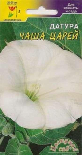 Датура – колдовской цветок