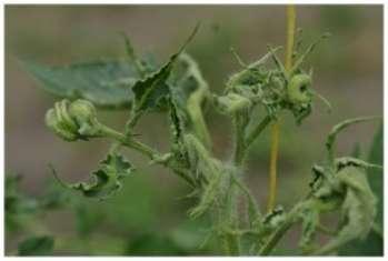 Распространенные заболевания растений