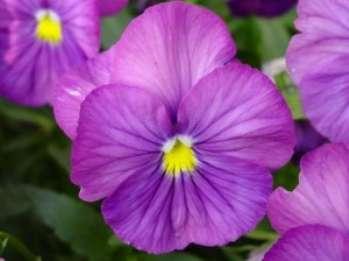 9 правил составления цветовых схем в саду
