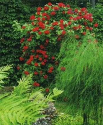 Использование флористики в ландшафтном дизайне