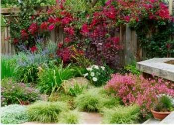 Коллекция злаков в саду