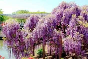 Вопросы сочетания растений по окраске