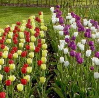 Как хранить цветочные луковицы