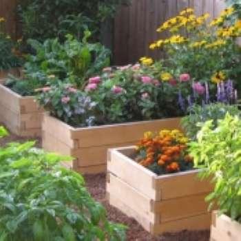 Цветочницы в малом саду