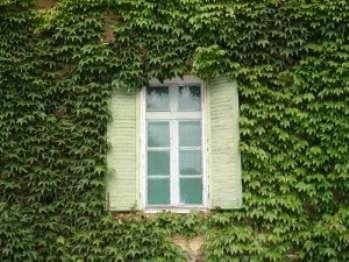 Распространенные вечнозеленые лианы в саду