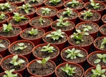 Как приготовить почвенный субстрат для выращивания рассады