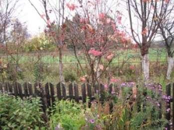 Садовые подготовительные работы в преддверии зимы