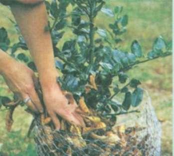 Средства по подготовке растений к зиме