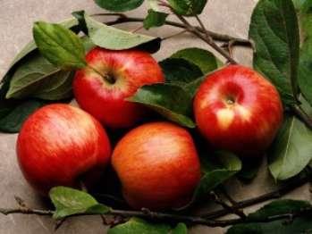 Какова зависимость урожая яблонь от листьев