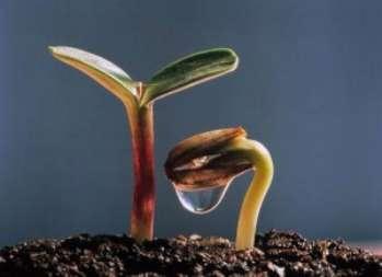 Семенное_размножение_комнатных_растений