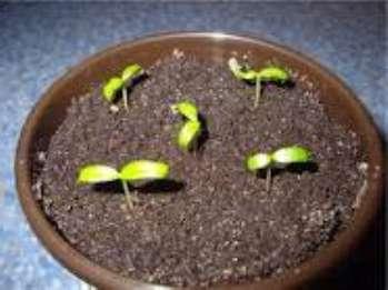 Выращивание_растений_из_семян
