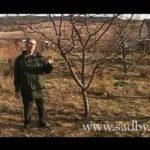 Подкормка дерева и борьба с вредителями. Важный уход за деревьями в саду. ©