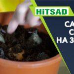 Сделайте ЭТО Если Свекла мелкая ✔️ Полезная зелень из свеклы ✔️  Советы садоводам Хитсад тв