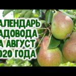 КАЛЕНДАРЬ САДОВОДА НА АВГУСТ 2020 ГОДА. Агропрогноз для садоводов