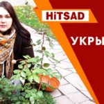 Как правильно укрыть Розу 🌹 Видео Советы садоводам от Хитсад.