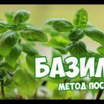 Посадка Базилика 🌱 Советы садоводам ✔️  Мастер класс